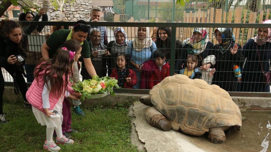صورة حديقة حيوانات تركية تحتفل بسلحفاة دخلت عامها 97