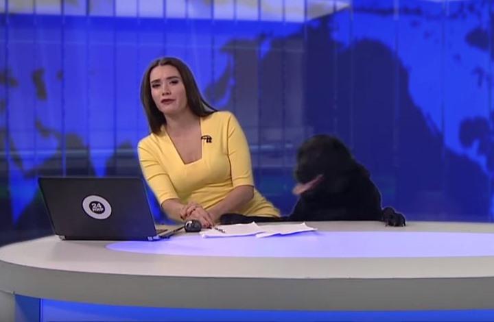 صورة كلب يقتحم استديو أخبار روسي ويعانق المذيعة (فيديو)