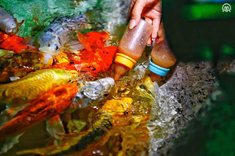 صورة أسماك تتغذى برضاعات الأطفال (صور)