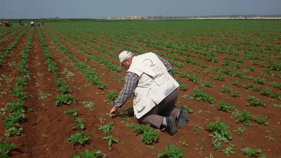 صورة 16 مليار دولار خسائر الزراعة في سوريا