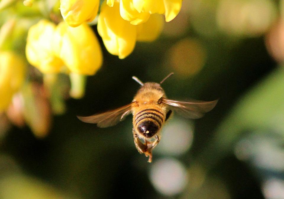 """صورة عجائب طبية مذهلة لـ""""لسعة النحل"""""""