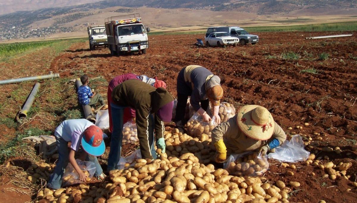 صورة الفاو: 16 مليار دولار خسائر القطاع الزراعي بسوريا