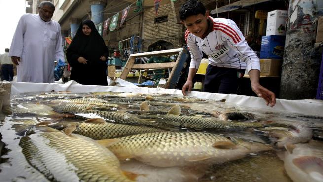 صورة مرض غامض يفتك بـ 1500 طن من أسماك العراق