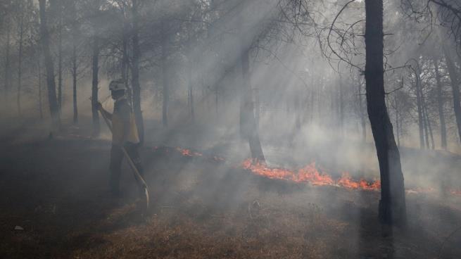 صورة تدمير أكبر محمية طبيعية للغابات في إدلب