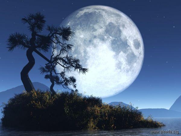 صورة أول شجرة على القمر.. الصين تغرس بذرتها!