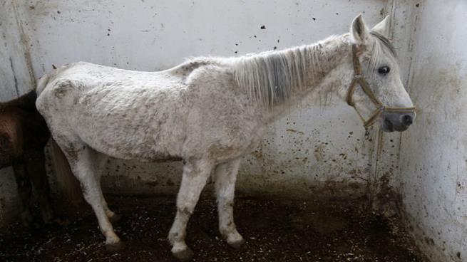 """صورة """"كارين"""" ملكة جمال """"الخيول"""" وأجودهم بالعالم..هكذا أصبح حالها في سوريا"""