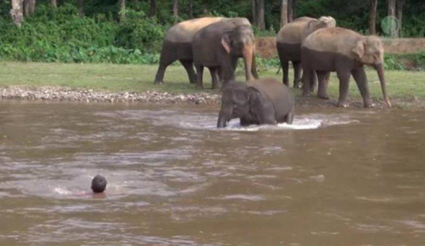 صورة الفيل الشهم يجتاح السوشال..شاهد ماذا فعل