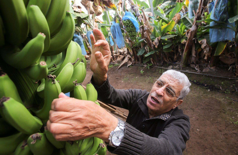 صورة في معركة العجز التجاري.. الموز سلاح الجزائر (صور)