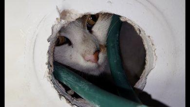 """صورة مشهد يحبس الأنفاس رجل ينقذ قطة عالقة في نافذة بطريقة """"ذكية وخطيرة""""- (شاهد)"""